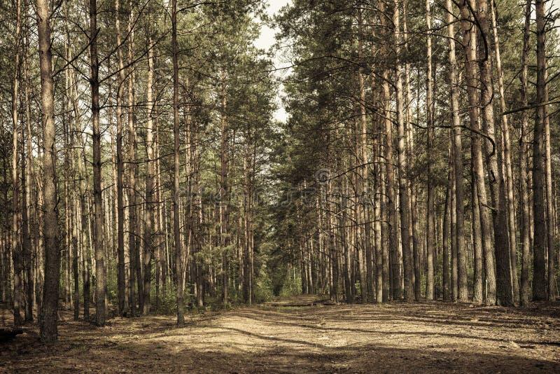 Foresta lunatica scura fotografia stock