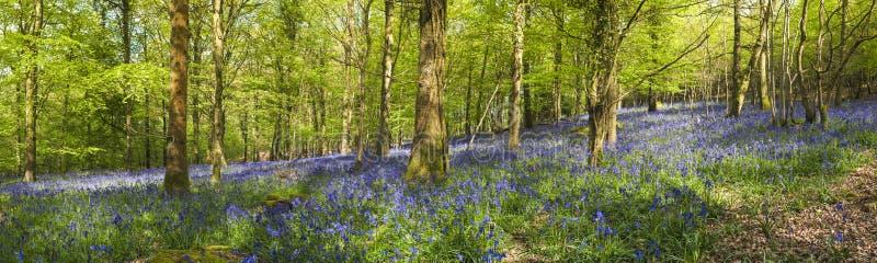 Foresta magica e fiori selvaggi di campanula fotografia stock