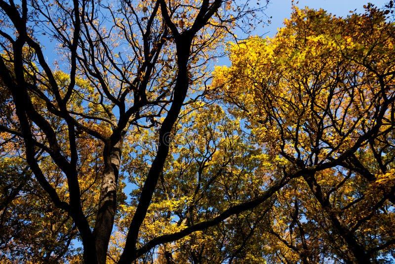 Foresta magica nella stagione di autunno fotografia stock libera da diritti