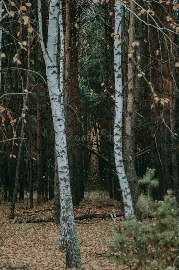 Foresta mista di autunno immagini stock
