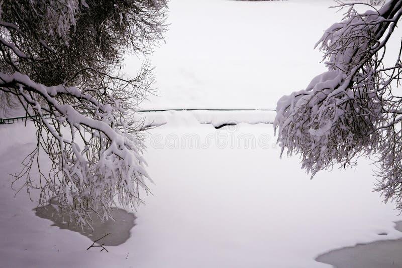 Foresta mista nella proprietà dopo le precipitazioni nevose, Mosca, Russia di Kolomenskoye fotografie stock libere da diritti