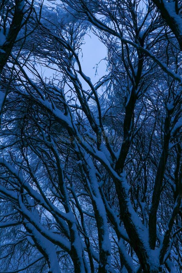 Foresta mista nella proprietà dopo le precipitazioni nevose, Mosca, Russia di Kolomenskoye immagini stock