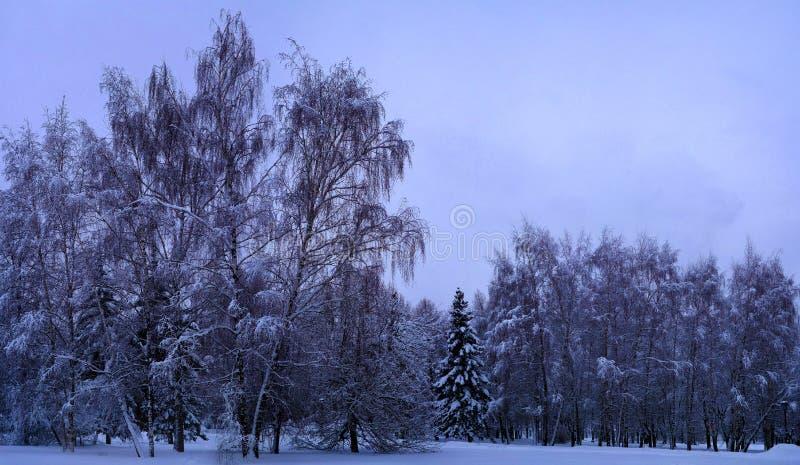 Foresta mista nella proprietà dopo le precipitazioni nevose, Mosca, Russia di Kolomenskoye fotografia stock libera da diritti