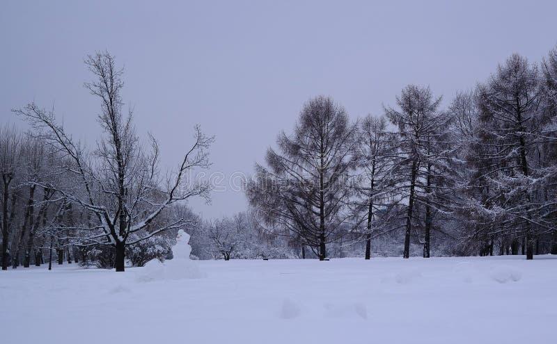 Foresta mista nella proprietà dopo le precipitazioni nevose, Mosca, Russia di Kolomenskoye immagine stock libera da diritti