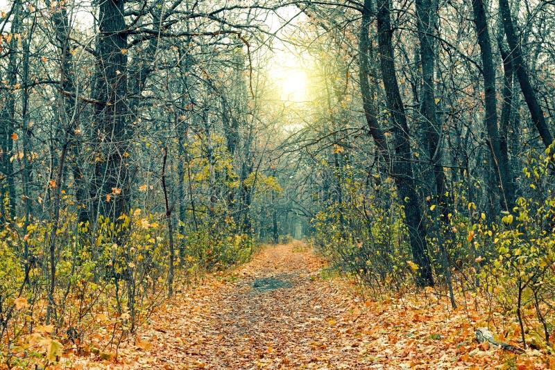 Foresta misteriosa nella sera dopo la pioggia Natura pittoresca di autunno Arrivederci autunno Paesaggio freddo di novembre fotografia stock