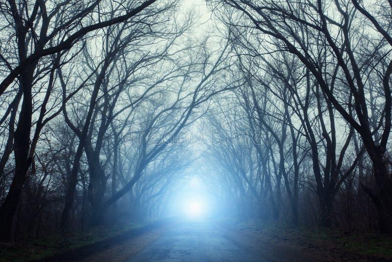 Foresta misteriosa spaventosa con la strada in nebbia in autunno immagini stock libere da diritti