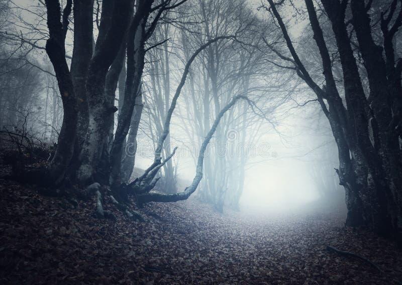Foresta misteriosa spaventosa in nebbia in autunno Alberi magici fotografia stock