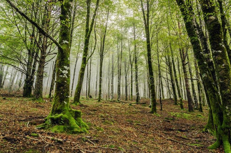 Foresta mistica fotografia stock