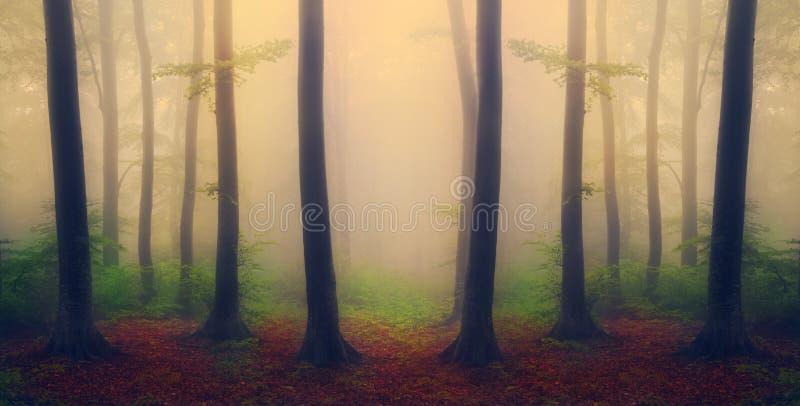 Foresta mistica nebbiosa durante la caduta immagine stock libera da diritti