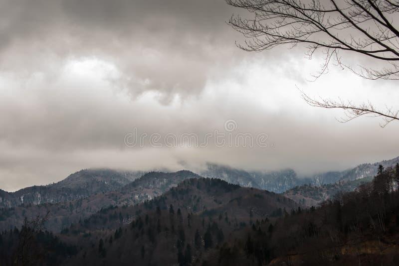 Foresta mistica nebbiosa sulle montagne collinose fotografie stock