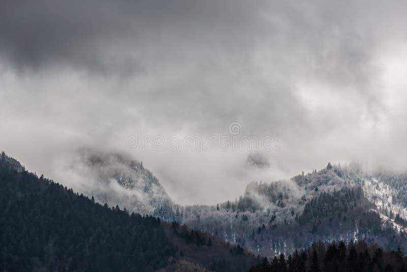 Foresta mistica nebbiosa sulle montagne collinose fotografia stock