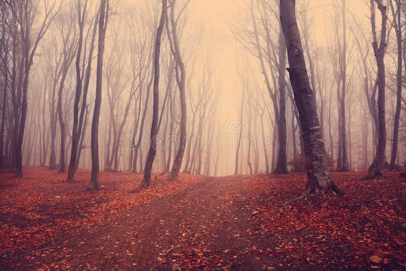 Foresta mistica scura immagine stock libera da diritti
