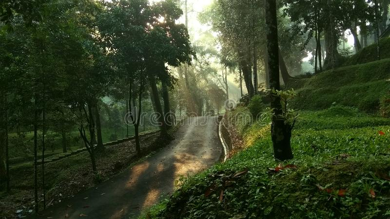 Foresta mistica sulla mattina fotografie stock