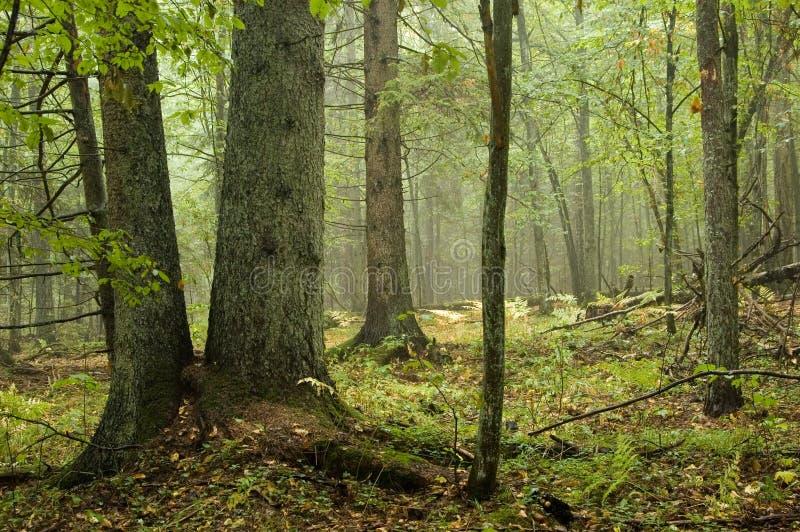 Foresta mixed naturale immagine stock libera da diritti