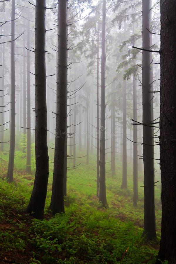 Foresta Mystical immagini stock libere da diritti