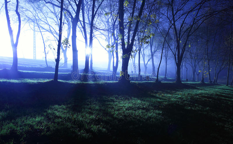 Foresta Mystical in azzurro fotografia stock
