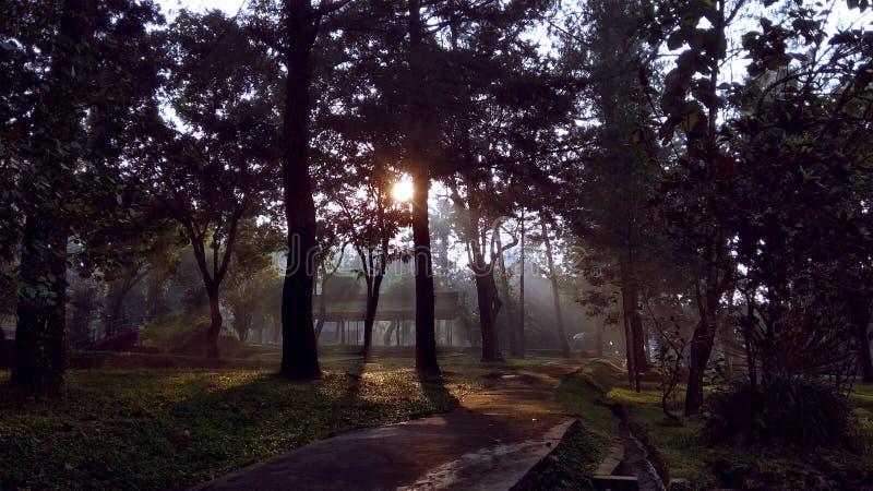 Foresta naturale degli alberi attillati immagine stock