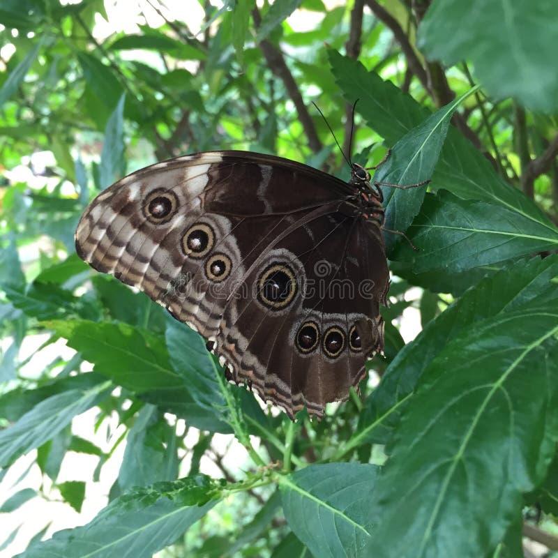 Foresta naturale di verde di bellezza della natura della farfalla immagine stock libera da diritti