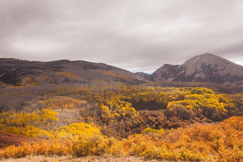 Foresta nazionale del sale della Manti-La fotografie stock