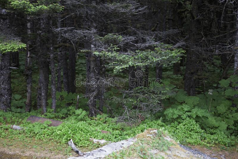 Foresta nazionale di Yakutat Alaska Tongass fotografia stock libera da diritti