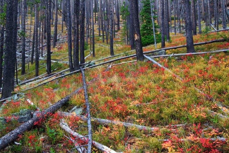 Foresta nazionale Montana del Clark e del Lewis fotografia stock libera da diritti