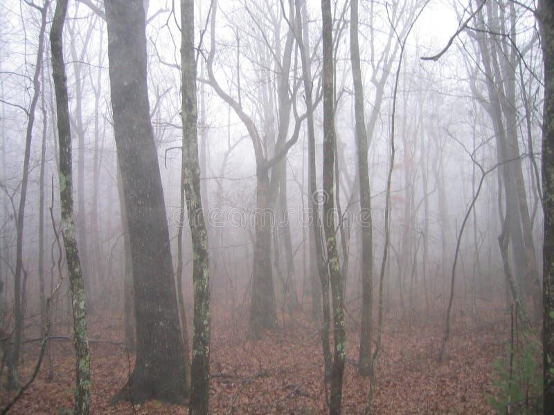 Foresta nebbiosa fotografia stock libera da diritti