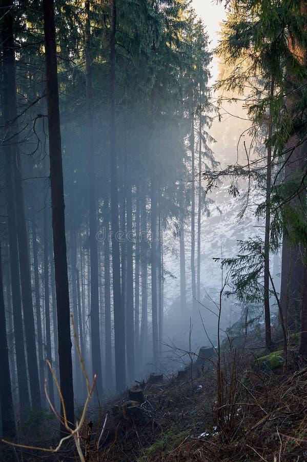 Foresta nebbiosa, AUSTRIA/Buchl immagini stock