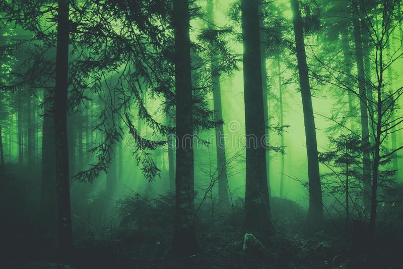 Foresta nebbiosa colorata verde scuro di favola di fantasia immagini stock