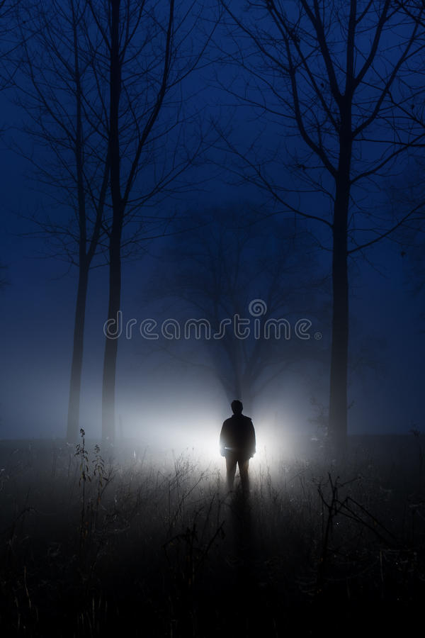 Foresta nebbiosa della siluetta impressionante all'alba immagine stock libera da diritti
