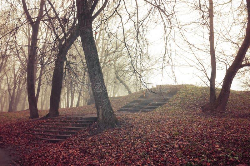 Foresta nebbiosa di autunno con i vecchi alberi nudi, lo staircade di pietra rovinato e le foglie rosse cadute sulla terra fotografia stock