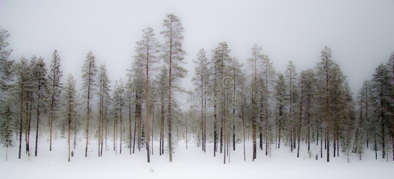 Foresta nebbiosa di inverno fotografie stock