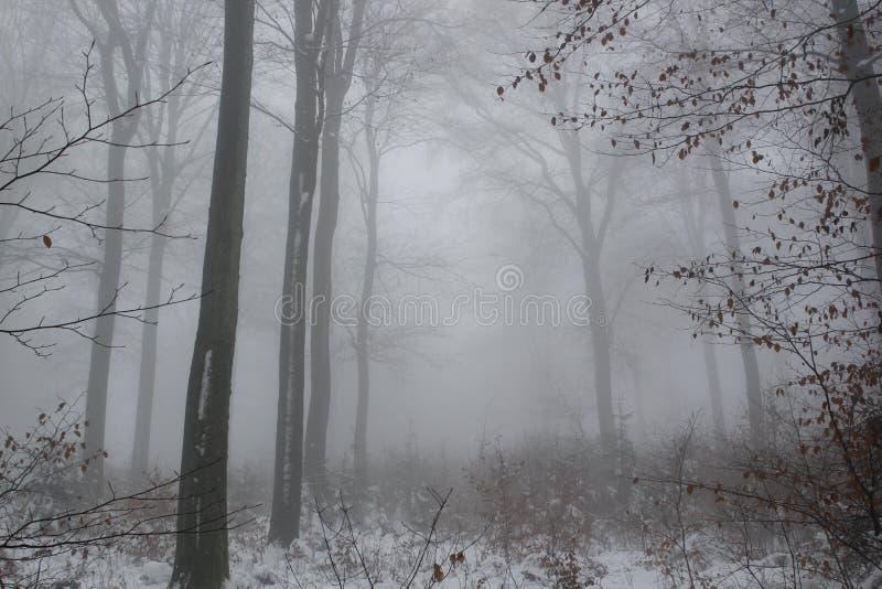 Foresta nebbiosa nell'inverno fotografia stock