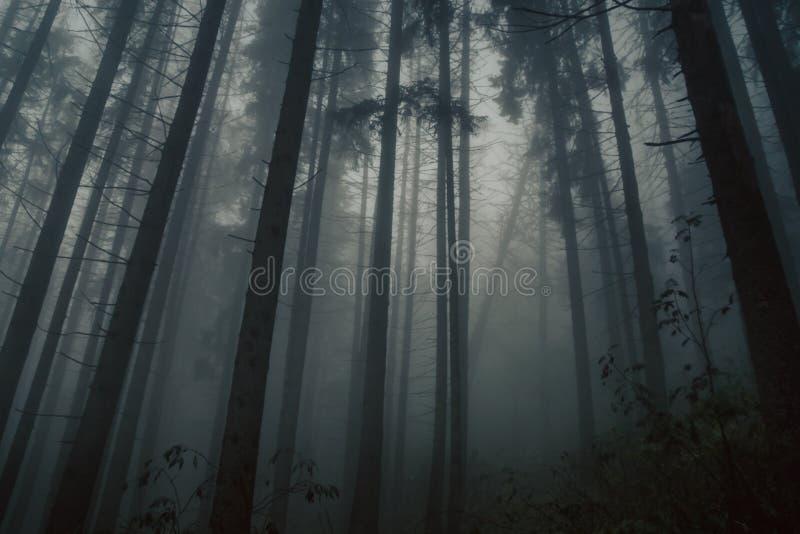 Foresta nebbiosa in un umore spaventoso e mistico in montagne di Tatra, Polonia fotografia stock libera da diritti