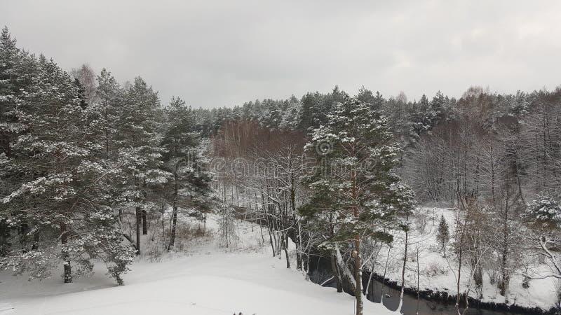 Foresta nell'inverno immagine stock