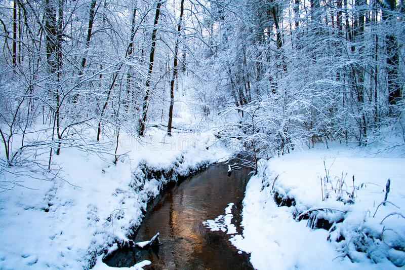 Foresta nell'inverno con neve ed il fiume immagine stock libera da diritti