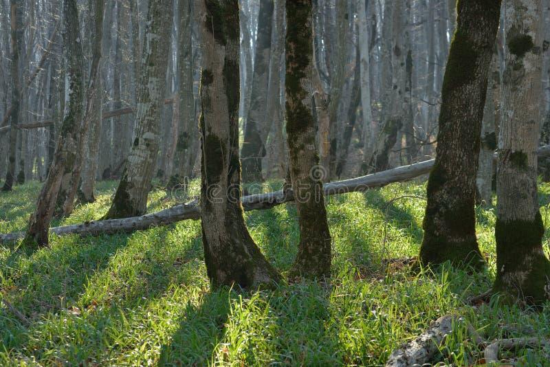 Foresta nella caduta immagine stock