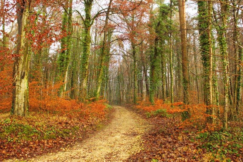 Foresta nella caduta tarda fotografia stock