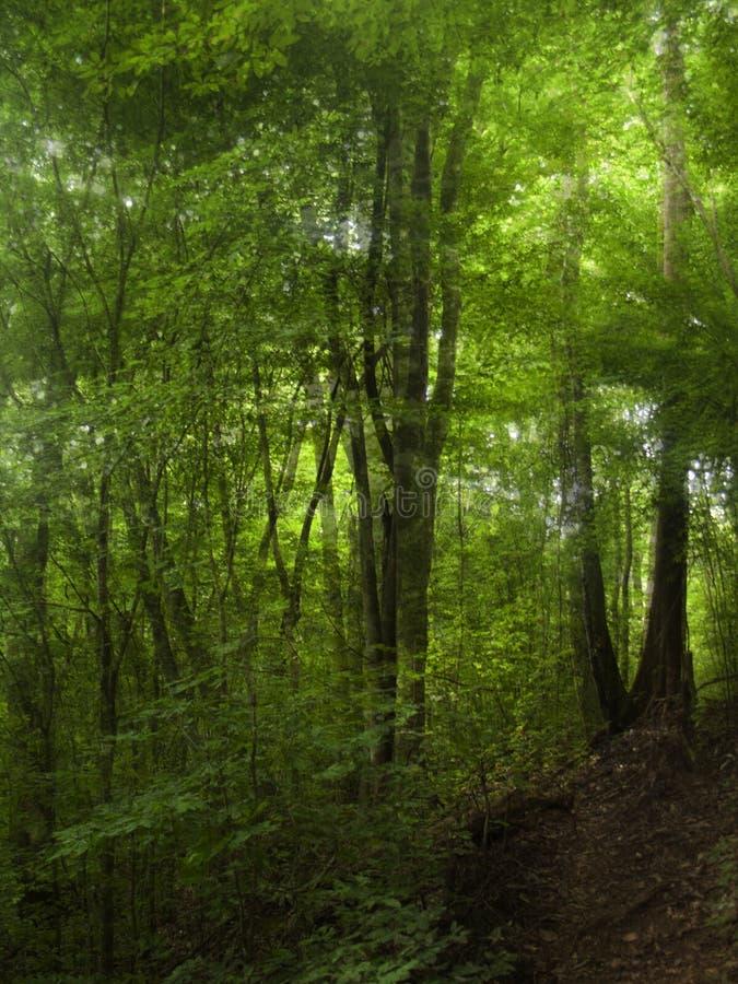 Foresta nella doppia esposizione della foschia immagini stock
