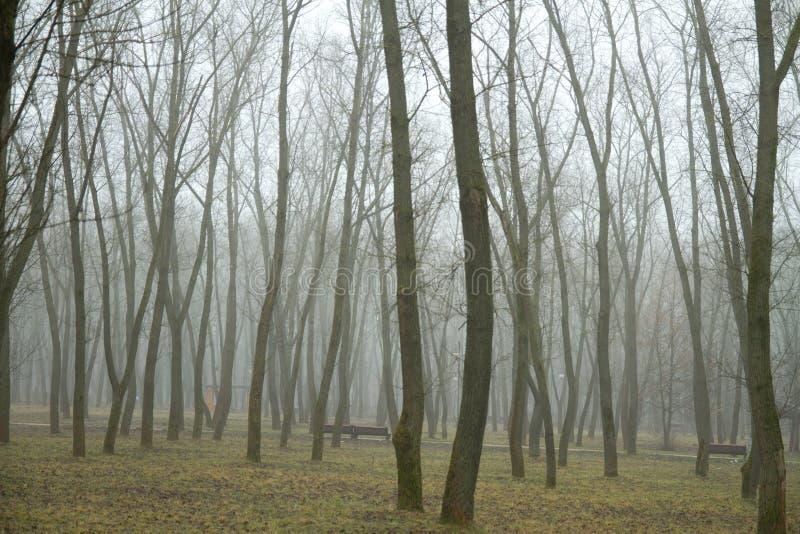 Foresta nella mattina di inverno fotografie stock libere da diritti