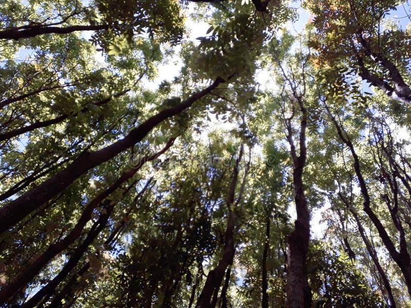 Foresta nelle Filippine fotografie stock libere da diritti
