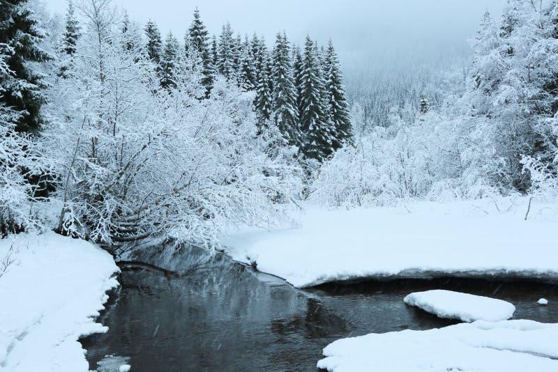 Foresta nelle montagne fotografia stock