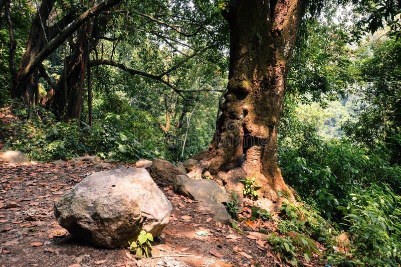 Foresta nelle montagne di Juayua, ruta de Las Flores, salva di EL immagine stock