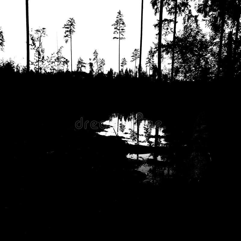Foresta nera immagini stock