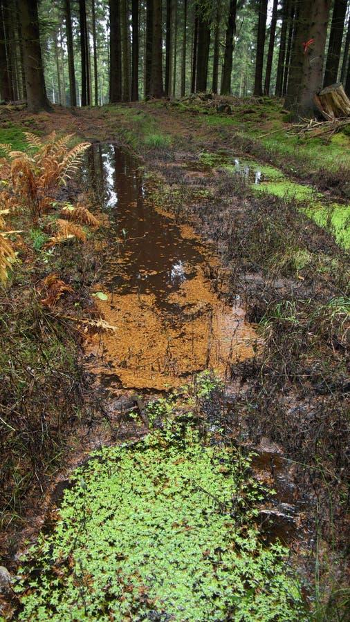 Foresta nera immagine stock