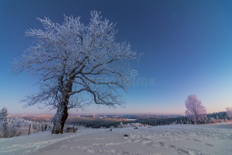 Foresta nera di bello inverno dell'albero fotografia stock libera da diritti