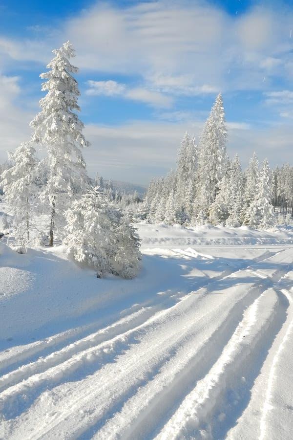 Foresta no.1 dello Snowy fotografia stock libera da diritti