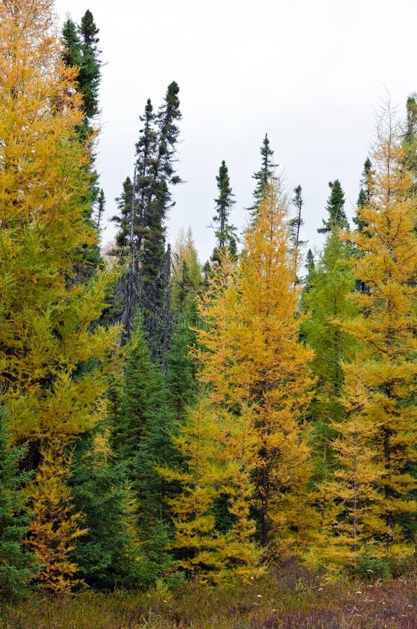 Foresta nordica di Ontario fotografie stock libere da diritti