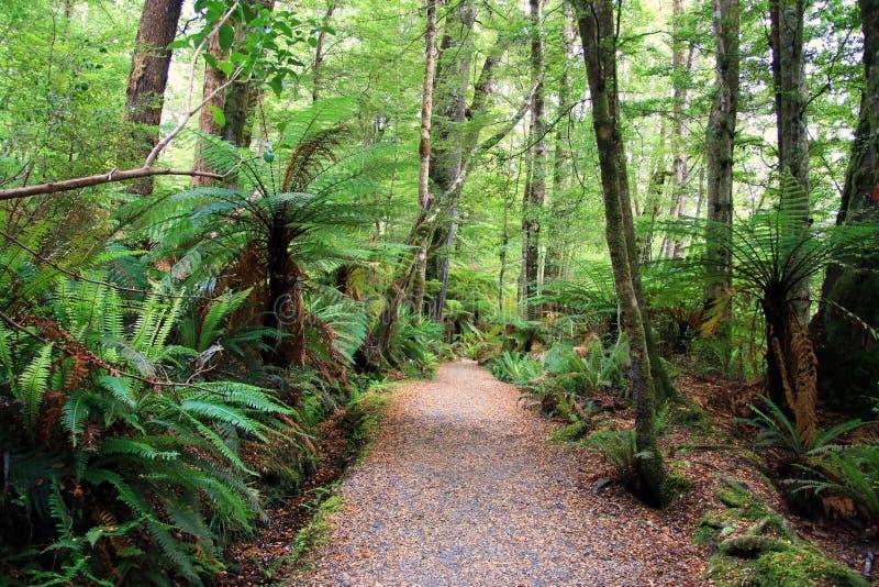 Foresta in Nuova Zelanda immagine stock