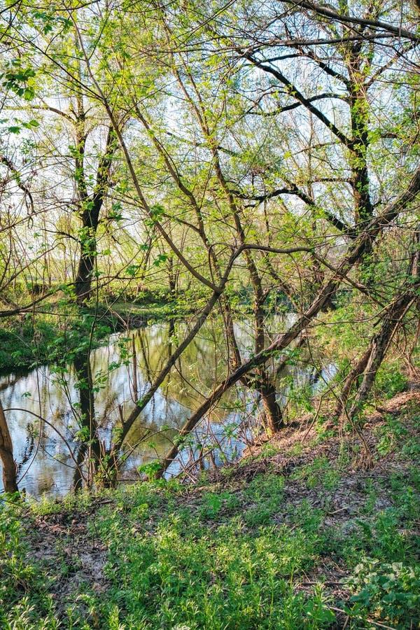 Foresta ombreggiata della primavera e piccolo fiume, Ucraina fotografia stock libera da diritti