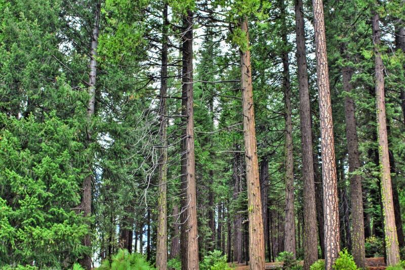 Foresta pacifica fotografie stock